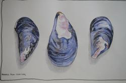 Drawn mussel pencil