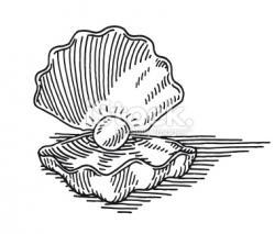 Drawn shell pearl shell
