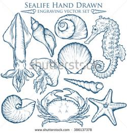 Drawn shell starfish