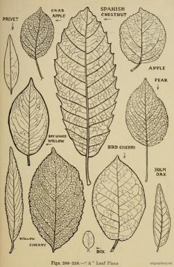 Drawn foliage leaf texture