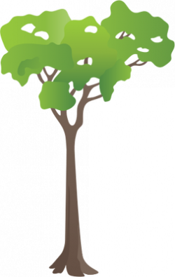 Shrub clipart tropical rainforest tree