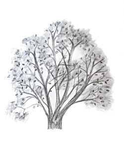 Drawn tree
