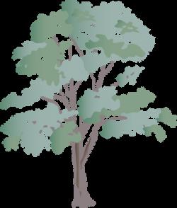 Drawn tree eucalyptus tree