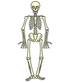 Drawn skeleton