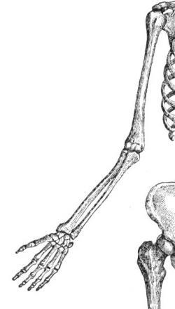 Drawn sleleton arm