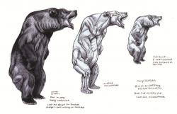 Drawn grizzly bear anatomy