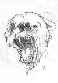 Drawn grizzly bear skull
