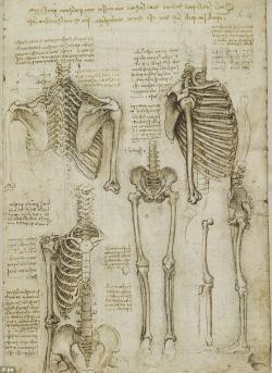 Drawn sleleton detailed