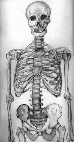 Drawn sleleton deviantart