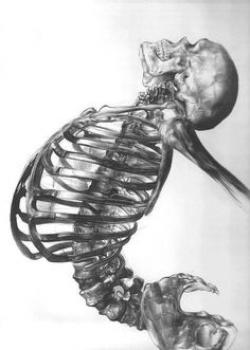 Drawn sleleton human skeleton