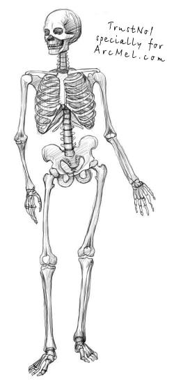Drawn skeleton low body