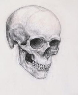 Drawn pice skull
