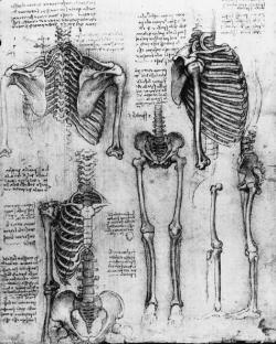 Drawn skeleton da vinci