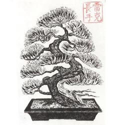 Drawn tree bonsai tree