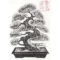 Drawn tree bonsai tree