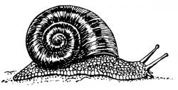 Millipede clipart Snail Clipart