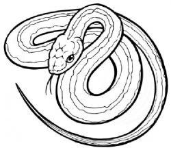 Garter Snake clipart illustrated