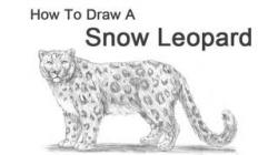 Drawn snow leopard