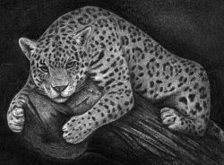 Drawn glass jaguar
