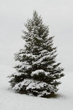 Drawn snowfall pine tree