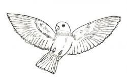 Drawn parakeet soaring bird
