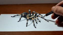 Drawn arachnid tarantula