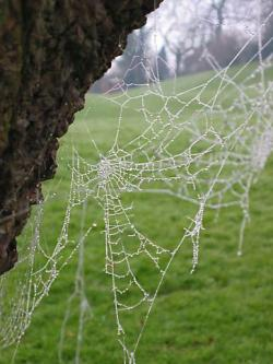 Drawn spider web magical tree