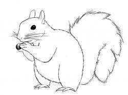 Drawn squirrel