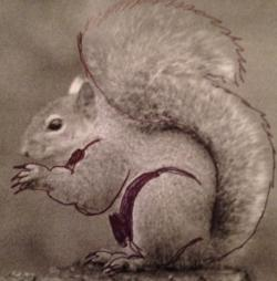 Drawn squirrel