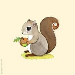Drawn squirrel cute