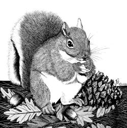 Drawn squirrel wildlife