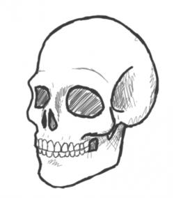 Drawn skull hamlet skull