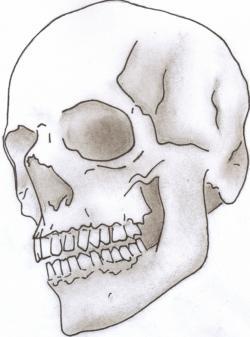 Drawn skull
