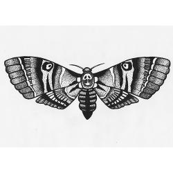 Deaths Head Moth clipart traditional