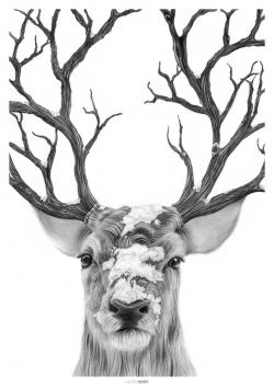 Drawn stag winter