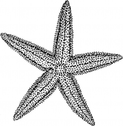 Drawn anchor blue starfish