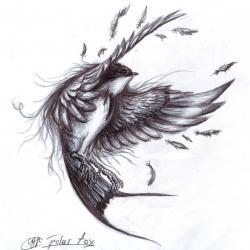 Drawn swallow really