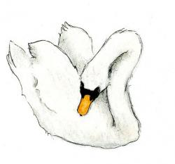 Drawn swan pencil drawing