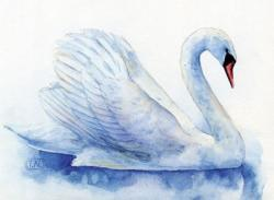 Drawn swan watercolour