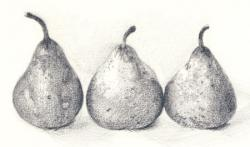 Drawn pear texture