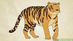 Drawn tigres draw a