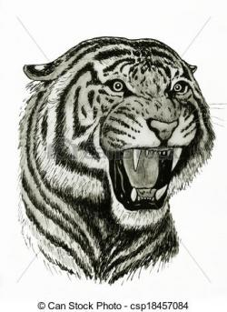 Drawn tigres bengal tiger