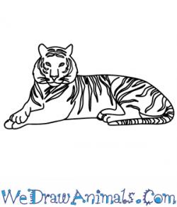 Drawn white tiger artic