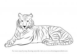 Drawn tiger bengal tiger