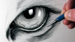 Drawn tiiger eye the tiger