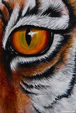 Drawn tigres eye the tiger