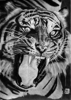 Drawn tiiger mad tiger