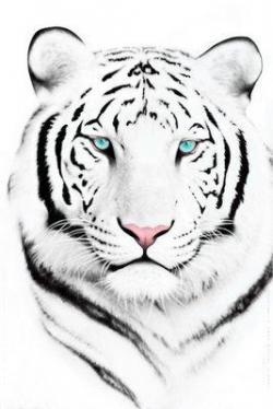 Drawn tigres snow tiger