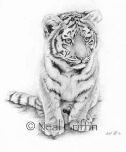 Drawn tigres tiger cub