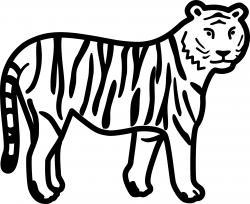 Drawn tiiger bengal tiger